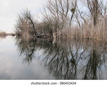 Reflection of trees and bulrush in a quiet winter lake on a cloudy day