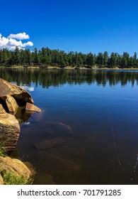 Reflection of trees on lake.