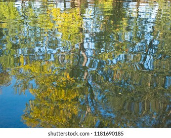 Reflection of trees on the water surface