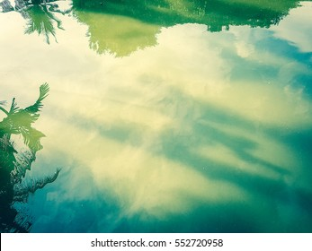 Reflection of trees and sky in the water caused by the sunlight.