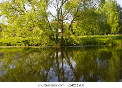 Reflection of trees in water. Peaceful rural view. Nature in beautiful bloom near the water. Background for Wallpaper. Idyllic views of nature. Branchy big tree.
