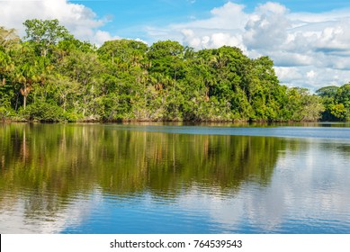 Reflection of the tropical rainforest in the Amazon River during a boat trip.  The tributaries of the Amazon traverse the countries of Guyana, Ecuador, Peru, Brazil, Colombia, Venezuela and Bolivia.
