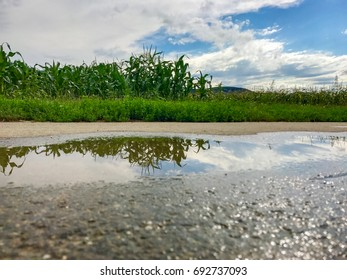 Reflection in water after rain