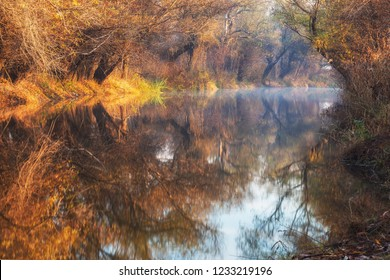 Reflection in the water of lush autumnal vegetation