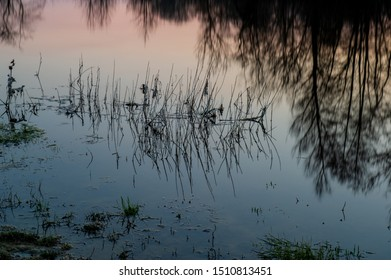 Reflection in the water on the surface of the river and plant silhouettes in the evening. Early spring, april.