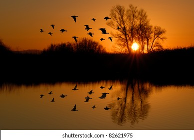 Reflection of Winter Evening Duck Flying over Wildlife Pond, San Jaoquin Delta, California Flyway