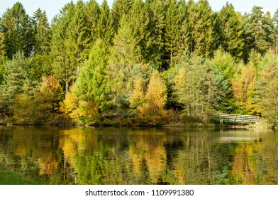 Reflections from the autumn trees in the Forest of Dean, England..