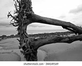 Reflections of a dead tree trunk stuck in the sand at Driftwood Beach/Deadwood Reflections
