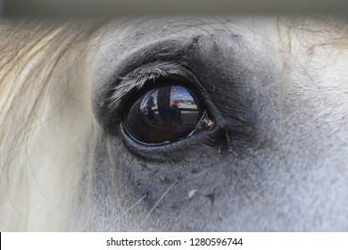 Reflections in the eye of a horse