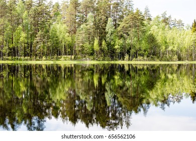 reflections of forest trees in the lake water at bright sun in summer and green foliage backgrounds