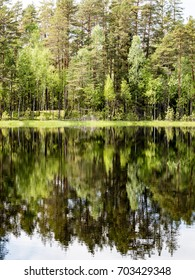 reflections of forest trees in the lake water at bright sun in summer and green foliage backgrounds - vertical, mobile device ready image