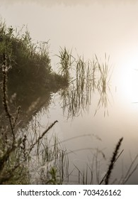 reflections in the lake water at sunrise with morning mist over the water and bright sun in summer - vertical, mobile device ready image