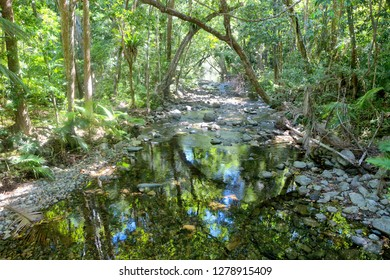 Reflections on idyllic Oliver Creek in The Daintree, Tropical North Queensland, Australia