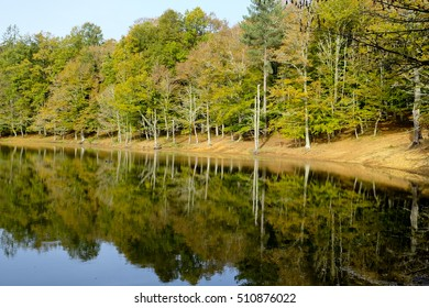 Reflections on the lake of the Umbria Forest inside Gargano National Park.