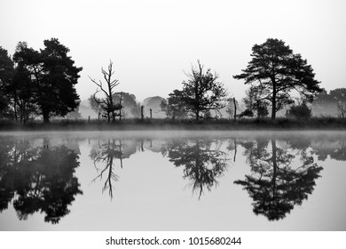 Reflections of a tree line in the water