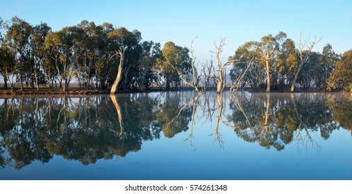Reflections of trees along the Wimmera River at Horsham, Australia