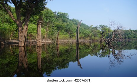 Reflections of trees in the river at rain forest in Amazonas, Brazil
