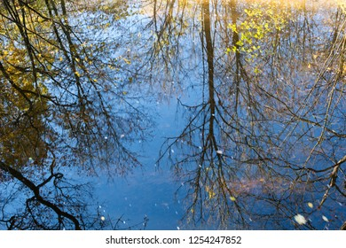 Reflex of trees on the water surface. Autumn.