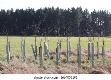 Reforestación del bosque con trenzas de hoja pequeñas como resultado del cambio climático