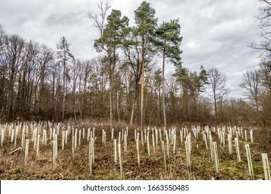 Reforestación en bosques mixtos con apoyo de tuberías para los árboles jóvenes
