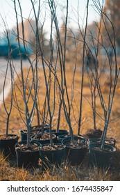 grupo de reforestación de troncos de árboles jóvenes en macetas