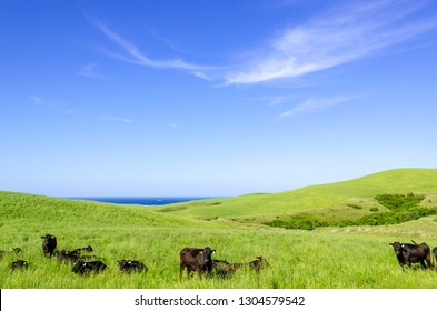 Refreshing ranch at the northern end of Hokkaido