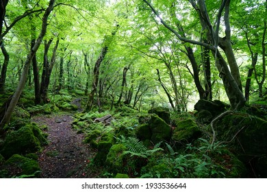a refreshing spring forest with a path