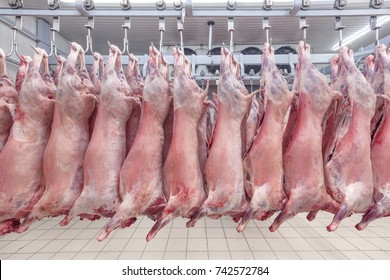 Refrigerated warehouse, hanging hooks of frozen lamb carcasses. Halal cut.