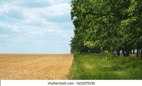 Regenerative Agriculture, Holistic Management, farming problem concept. Yellow field with a blue sky and a green forest with grass.