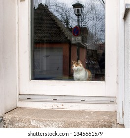Regensburg, Germany: cat observes beyond the glass of the door.