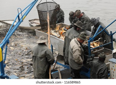 REGENT CZECH REPUBLIC - OCTOBER 18: unidentified fisherman enjoy harvest of pond Regent on October 18, 2012. It is Czech's traditional fishing technology with a very long history dating back to 1550.