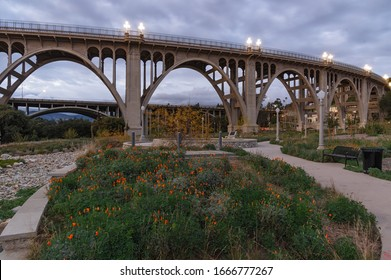 Reginald Desiderio Park in Pasadena and the Colorado Street bridge over the Arroyo Seco. Image taken at dusk. Golden poppies are seen in the foreground, and the 134 Freeway in the background.