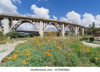 The Reginald Desiderio Park in Pasadena and the Colorado Street bridge over the Arroyo Seco. Image showing seasonal golden poppies in the foreground and puffy white clouds in the background.