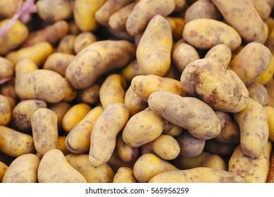 Regional potatoes from the Andes at a market in Peru/ Pisac/ Cusco, Peru, south america
