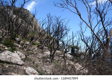 regrowth after fire, wilsons promontory national park