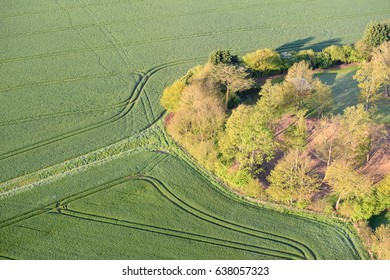 A regular pattern of tracks through crops on farmland, contrasting with a copse of trees. Seen from the air in early morning. Essex, England.