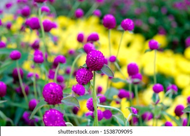 Regular perspective of yellow flowers ina garden.
