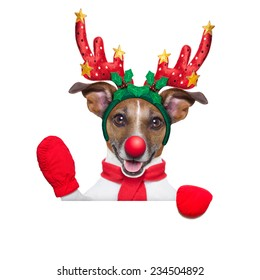 reindeer dog behind a blank banner with a red nose  and waving hand isolated on white background