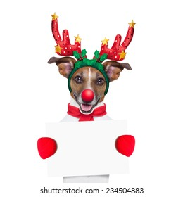 reindeer dog holding  a blank white placard or banner with a red nose , isolated on white background