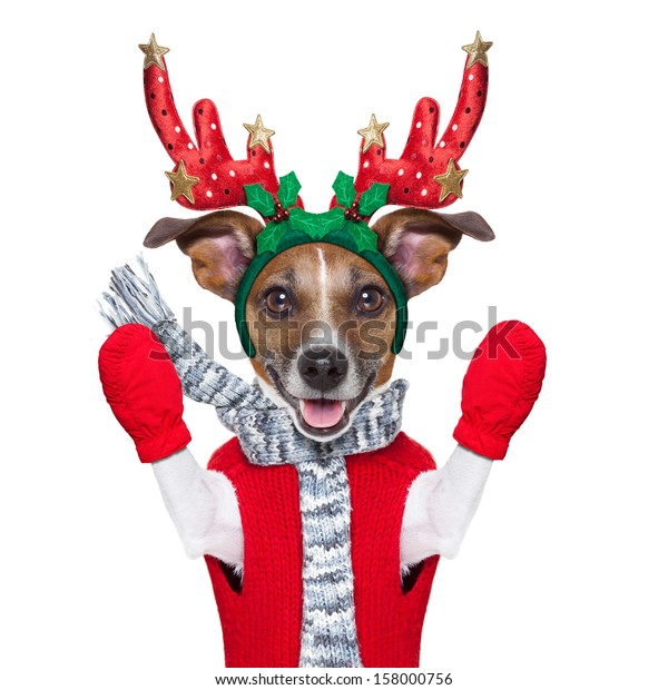 reindeer dog with red gloves and pullover