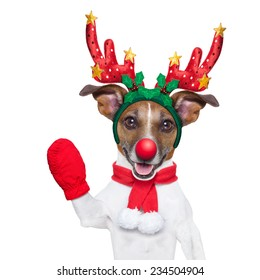 reindeer dog with a red nose  and waving hand isolated on white background