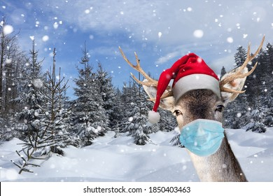Reindeer with face mask in winter