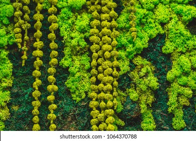 Reindeer moss wall, green wall decoration made of reindeer lichen Cladonia rangiferina, color of the year 2018, isolated on white, usable for interior mock. Vertical gardening.