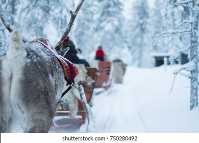 Reindeer Safari in Finnish Lapland at Christmas near Rovaniemi