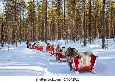 Reindeer sledding caravan safari with people in winter forest at Rovaniemi, Lapland, Northern Finland.