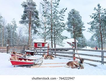 Reindeer with sledge in forest in winter Rovaniemi, Lapland, Finland