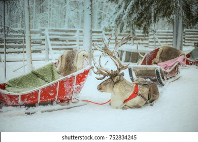 Reindeer sledge for Santa Claus giving present to children during Christmas day, Santa Claus Village, Lapland Rovaniemi, Finland