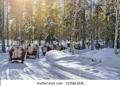 Reindeer Sleigh Safari Ride in Winter Snow Forest at Finnish Saami Farm in Rovaniemi, Finland, Lapland at Christmas. At the North Arctic Pole.