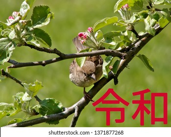 The Reiwa period Reiwa jidai. The next era of Japan on a green background of tree branches with blooming flowers and sparrow. Text in Japanese is Reiwa.