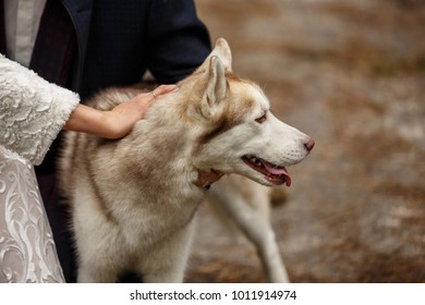 Relationship and friendship of dog and people. Happy couple with husky. 2018 - Year of Dog
